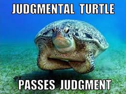 judgmental turtle passes judgment